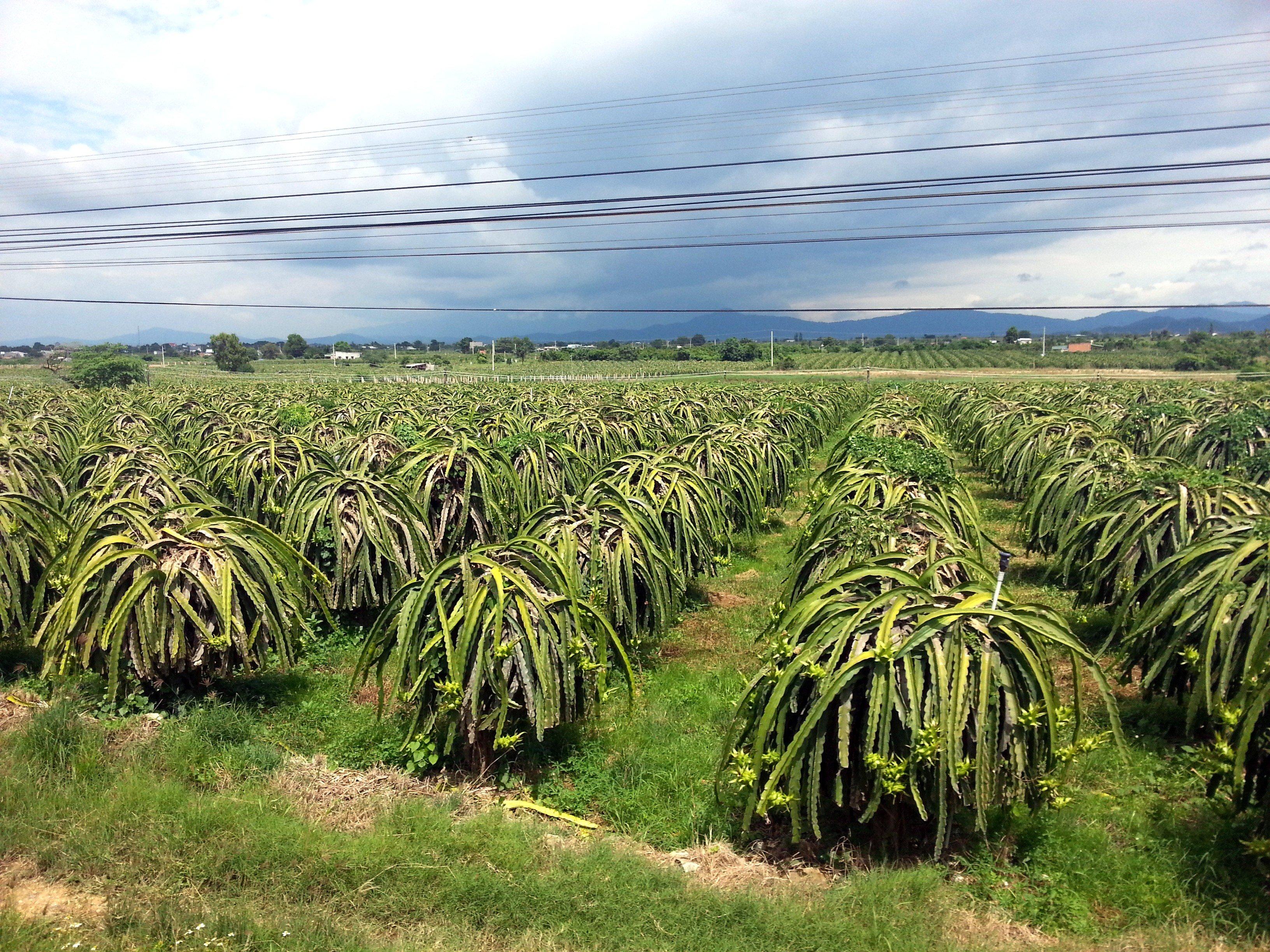 Farmland on the way to Nha Trang